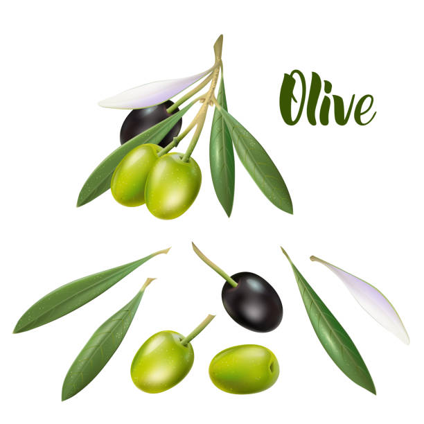 Realistic olive branch 3d illustration for advertising posters, postcards, labels Realistic olive branch 3d illustration for advertising posters, postcards, labels olives stock illustrations