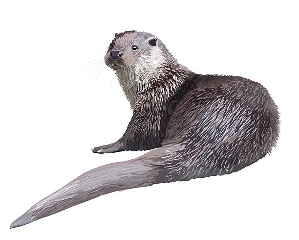 realistic otter - otter stock illustrations, clip art, cartoons, & icons