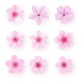 Realistic pink sakura petals icon set. Gradient mesh 3d cherry petals. Vector illustration.