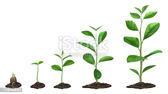 istock Realistic plant growth stages. Young seed growing in ground, green plants in soil, spring sprout blooming stage, isolated vector illustration set 1206468097