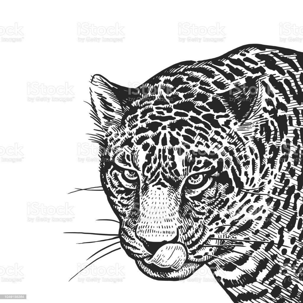 Portrait Réaliste De African Animal Jaguar Gravure De