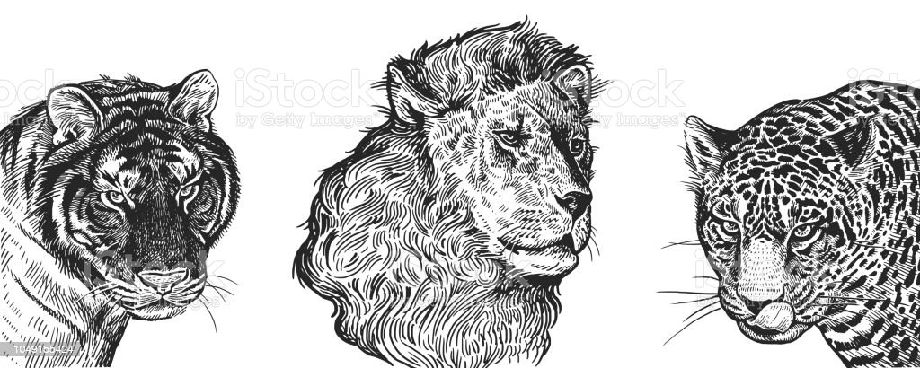 realistisches bild der afrikanischen tiere l we tiger und jaguar vintagegravur schwarz wei. Black Bedroom Furniture Sets. Home Design Ideas