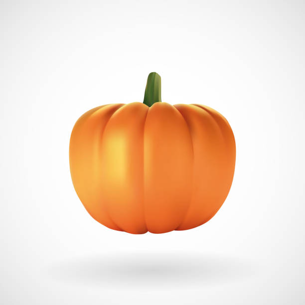 realistic pumpkin with white background - pumpkin stock illustrations