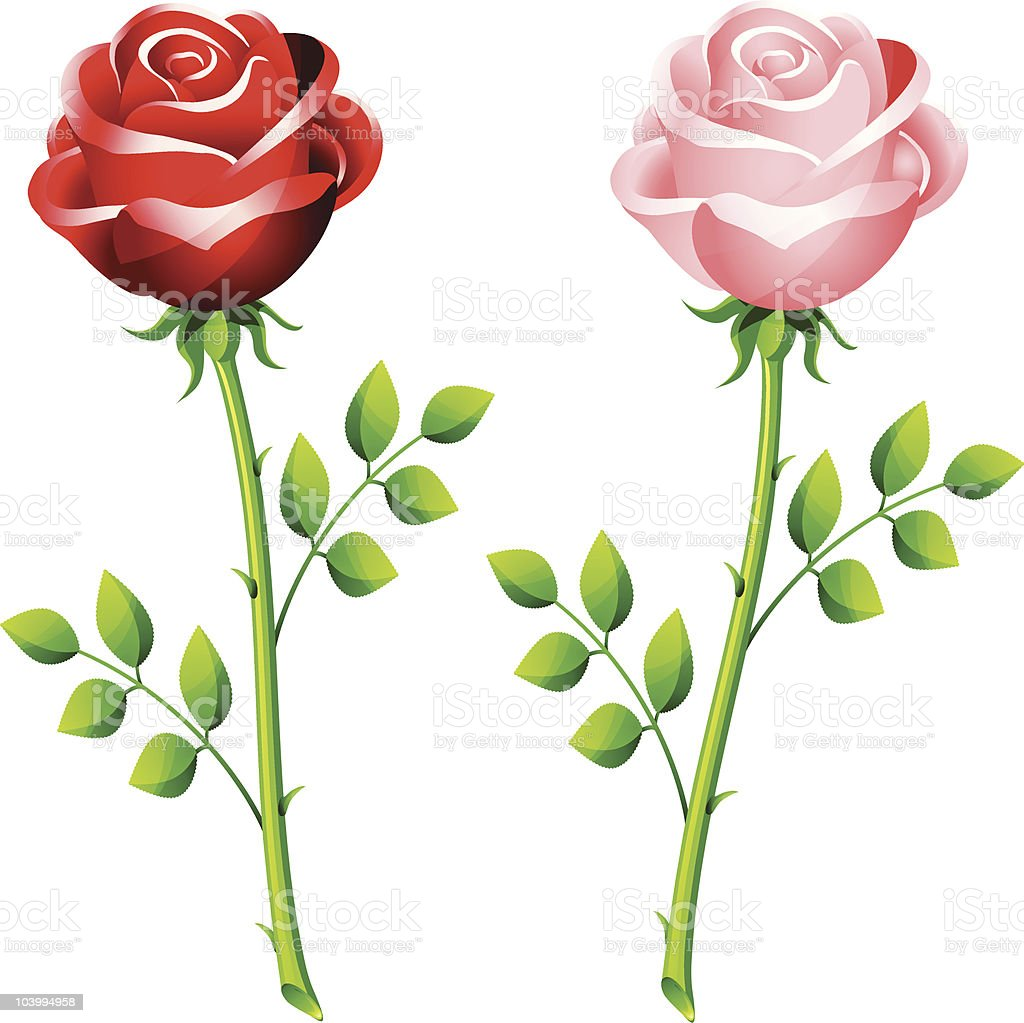 realistic red and pink rose on a stem royalty-free realistic red and pink rose on a stem stock vector art & more images of abstract