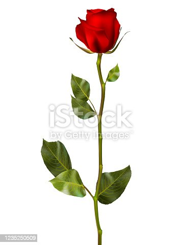 istock Realistic red vector rose. EPS 10 1235250509