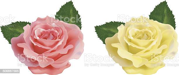 Realistic rose on a white background vector id506887565?b=1&k=6&m=506887565&s=612x612&h=3 uaggyxv6gtnoam 30izjt0hf0 r6 aysbie0jgyrc=