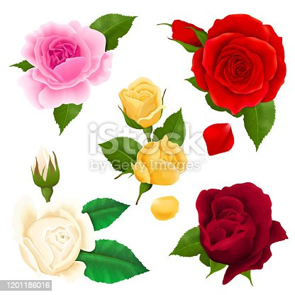 Rose flowers realistic set with different colors and shapes isolated  vector illustration