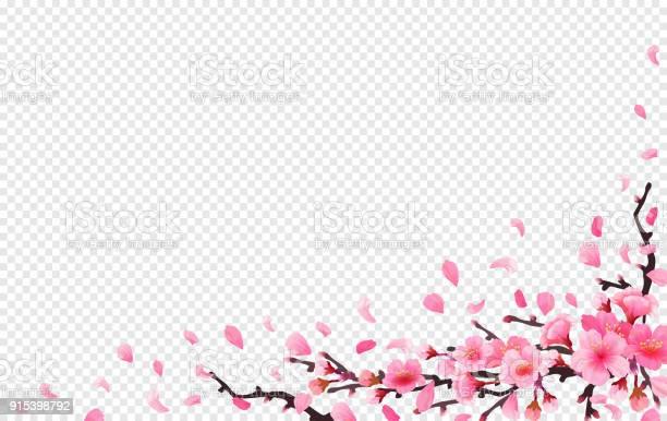 Realistic sakura japan cherry branch vector id915398792?b=1&k=6&m=915398792&s=612x612&h=si1eijura aumumtpvygciiisyy1 polcqonuva1emy=