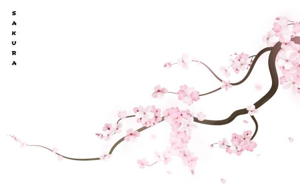 Realistic sakura japan cherry branch with blooming flowers. Vector illustration vector art illustration