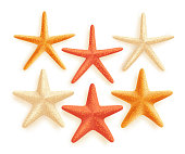 3D Realistic Set of Vector Starfish with Colors for Summer