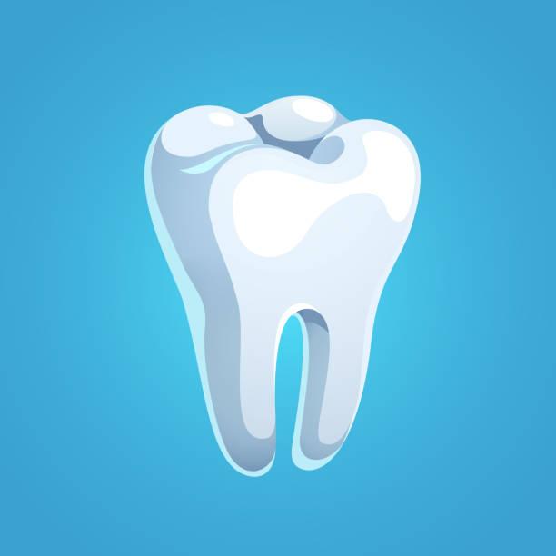 bildbanksillustrationer, clip art samt tecknat material och ikoner med realistiska lysande molar tand med vit emalj. mall för annons design. flat isolerade vektor - emalj