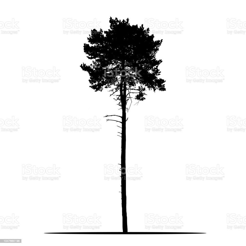 Realistische Silhouette des Baum - Kiefer mit Niederlassungen und Nadel - isolierte Vektor auf weißem Hintergrund – Vektorgrafik