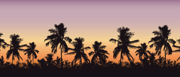 Realistic silhouette of tree tops, palm trees in tropical landscape, with morning orange-pink sky and with space for text - vector Realistic silhouette of tree tops, palm trees in tropical landscape, with morning orange-pink sky and with space for text - vector haiti stock illustrations