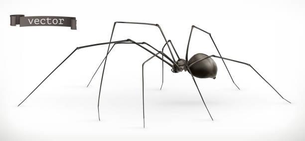 현실적인 거미, 할로윈입니다. 3 차원 벡터 아이콘 - 곤충 실루엣 stock illustrations