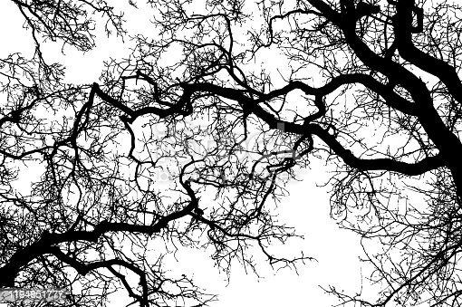 Realistic tree branches silhouette on white background (Vector illustration).
