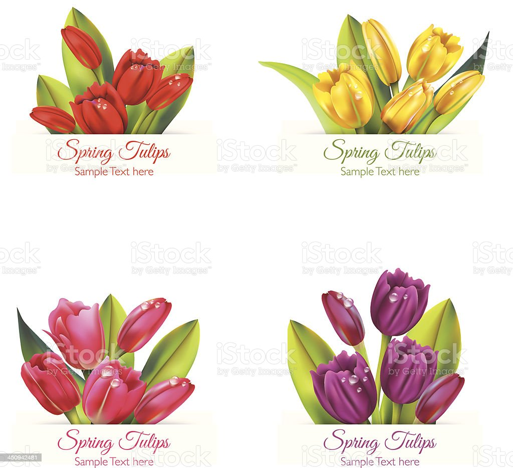 Realistic Tulip Banners vector art illustration