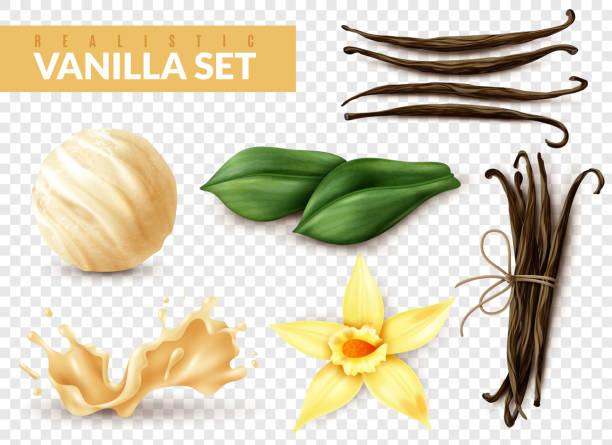 stockillustraties, clipart, cartoons en iconen met realistische vanille transparante set - vanille