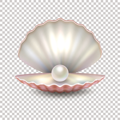 Realistic vector beautiful natural open sea pearl shell closeup isolated on transparent background. Design template, clipart, icon or mockup in EPS10