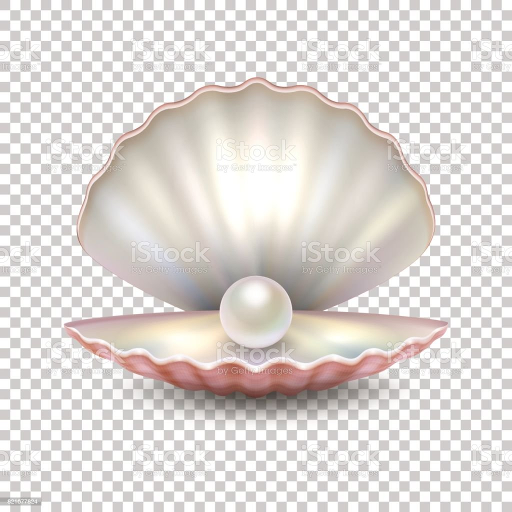 Realistic vector beautiful natural open sea pearl shell closeup isolated on transparent background. Design template, clipart, icon or mockup in EPS10 vector art illustration