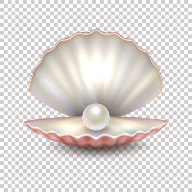 realistic vector beautiful natural open sea pearl shell closeup isolated on transparent background. design template, clipart, icon or mockup in eps10 - animal shell stock illustrations, clip art, cartoons, & icons