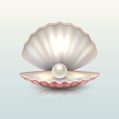 Realistic vector beautiful natural open sea pearl shell closeup with reflection. Design template, clipart, icon or mockup in EPS10