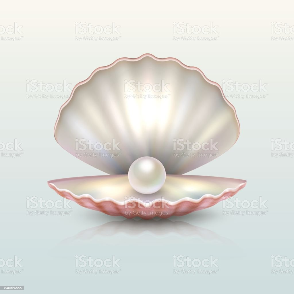 Realistic vector beautiful natural open sea pearl shell closeup with reflection. Design template, clipart, icon or mockup in EPS10 vector art illustration
