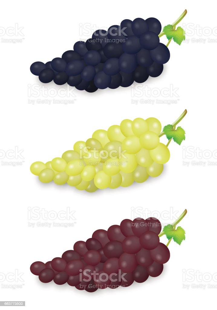 Realistic vector blue, green and red grapes bunch set isolated on white background. Design template in EPS10 vector art illustration