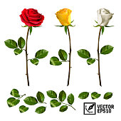 Realistic vector elements set of roses ( leaves, bud and an open flower) with the ability to change the appearance of the flower, as in the constructor