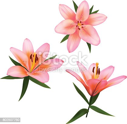 Realistic vector flowers set. Bouquet of pink lilies. Isolated vector illustration on white background.