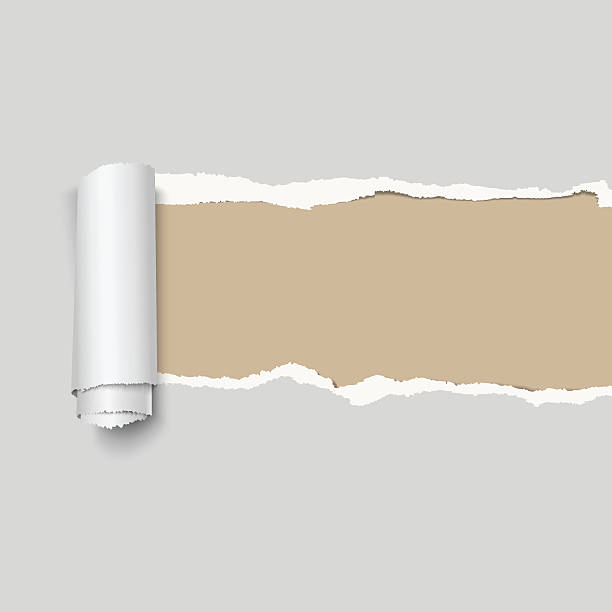realistic vector gray torn paper. - skórka stock illustrations