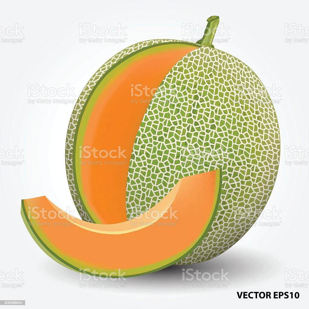 Royalty Free Cantaloupe Clip Art, Vector Images ... Honeydew Melon Clip Art
