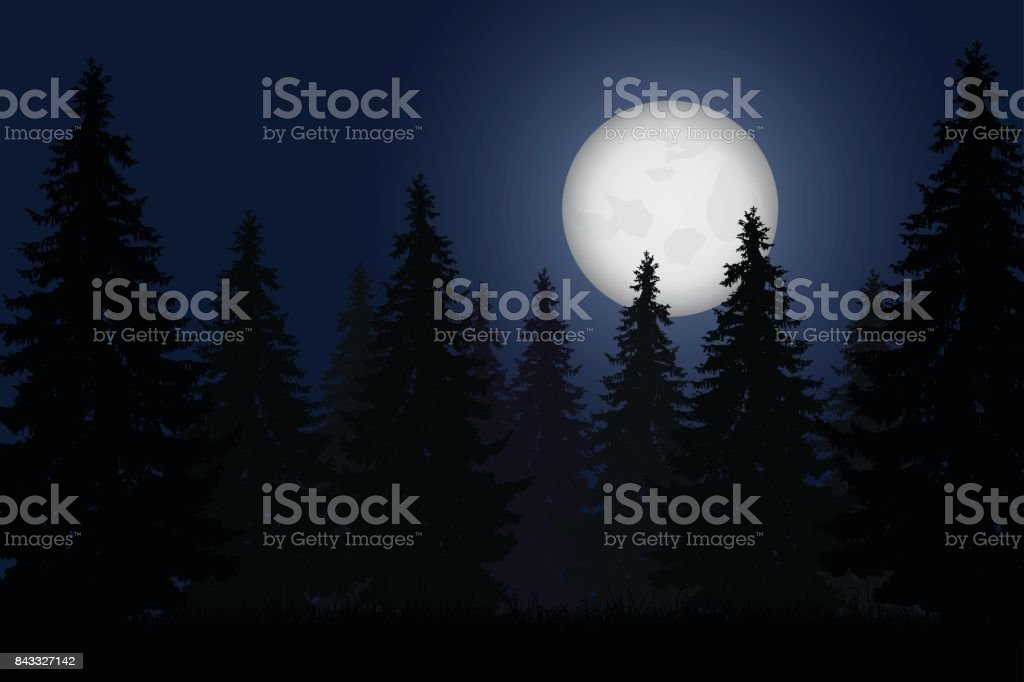 Realistic vector illustration of forest with trees under night sky with shining moon vector art illustration