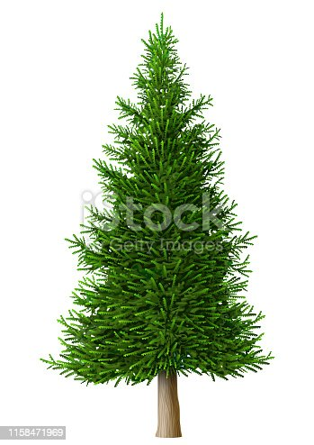 Realistic vector pine tree isolate. Plant with green foliage. Forest nature and ecology. Park