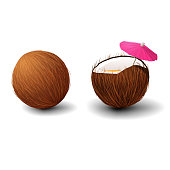 Realistic vector volumetric coconut isolated on white background