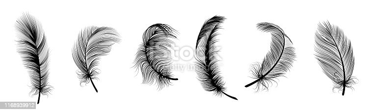 Black fluffy feather. Hand drawing vintage art realistic quill feathers for pen detailed isolated vector elegant silhouette sketch bird plume set