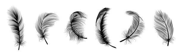 illustrazioni stock, clip art, cartoni animati e icone di tendenza di realistic white feathers. birds plumage, falling fluffy twirled feather, flying angel wings feathers. realistic isolated vector set - piume colorate