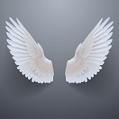 Realistic white wings in vector