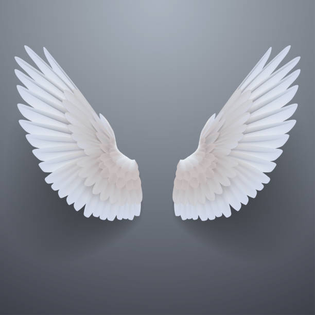 realistic white wings - animal wing stock illustrations