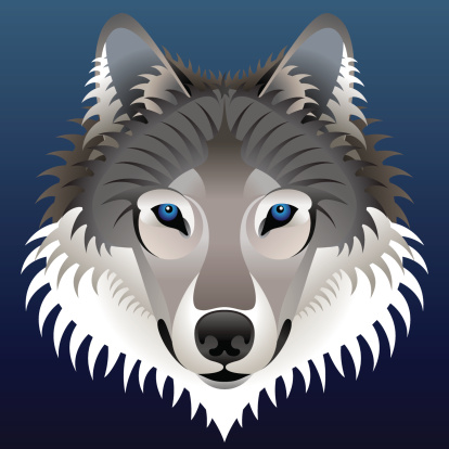 Realistic wolf's face