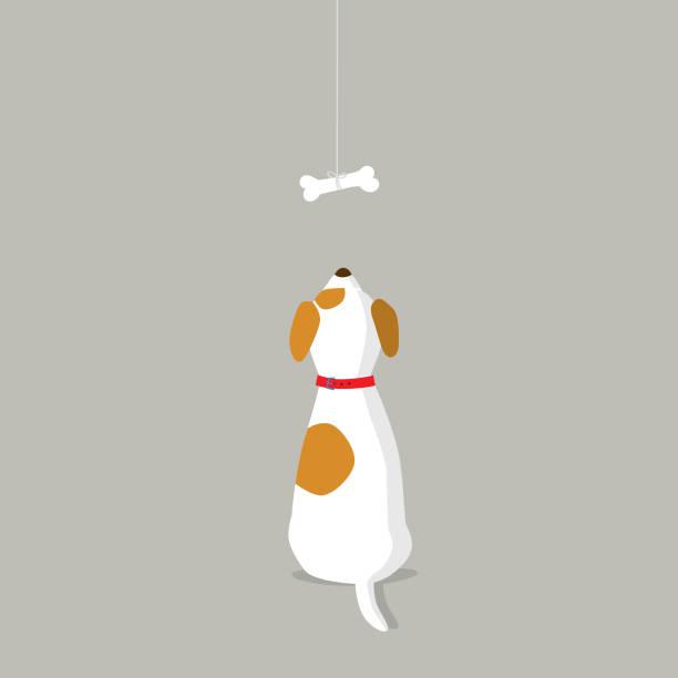ilustrações de stock, clip art, desenhos animados e ícones de rear view of dog looking at dog bone - dog food