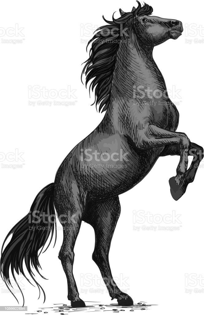 Rearing Black Horse Sketch For Equine Sport Design Stock Illustration Download Image Now Istock