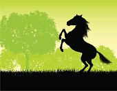 """Rearing Stallion Background. Silhouette background illustration of a Rearing Stallion. Check out my """"Vectors Animals & Insects"""" light box for more."""