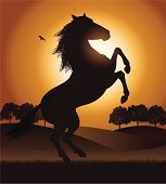 """Silhouette illustration of a rearing horse in a field with bird. Check out my """"Vectors Animals & Insects"""" light box for more."""