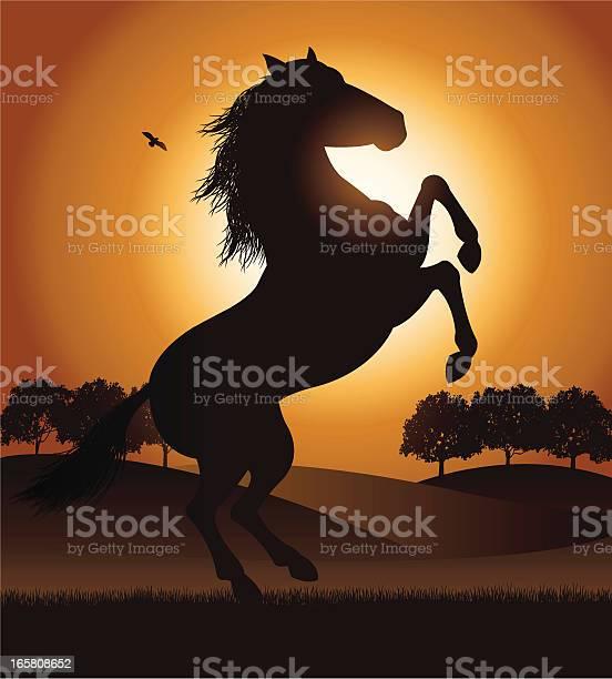 Rearing stallion horse in field vector id165808652?b=1&k=6&m=165808652&s=612x612&h=rulmzoz mu46pyqk3ylghauuxibgobkz7 rv425h80m=