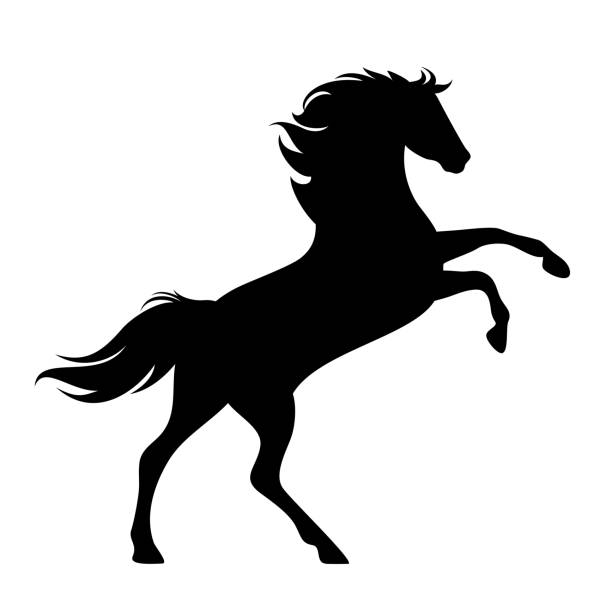 rearing up horse black vector silhouette vector art illustration