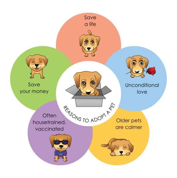 stockillustraties, clipart, cartoons en iconen met redenen te nemen een huisdier vector infographics - adoptie