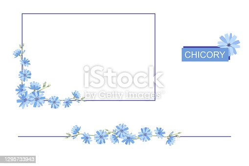 Rectangular frame of blue chicory flowers. Copy space for design. Border of chicory on a white background. Vector illustration.