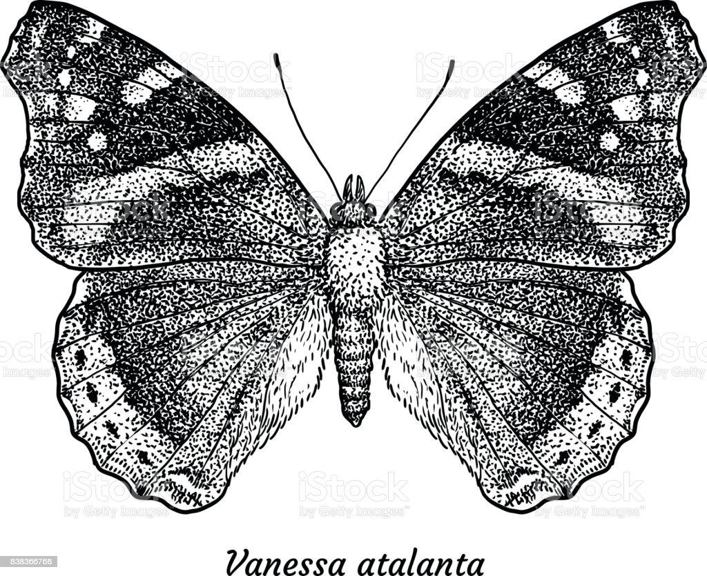 Red Admiral Schmetterling Abbildung, Zeichnung, Gravur, Tinte, Strichzeichnungen, Vektor – Vektorgrafik