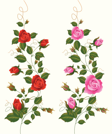 Red and Pink Rose Vine.