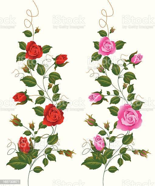 Red and pink rose vine vector id165733871?b=1&k=6&m=165733871&s=612x612&h=c6ugl4t50 v19dgfvlz0z6mncpfjcfxtmy4 rmt1dma=